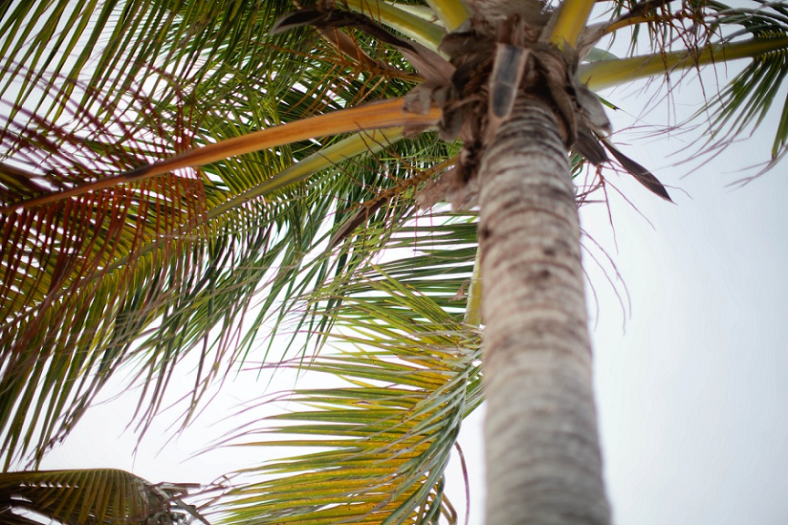 Miami-Beach-Elopement-Inspiration_0006